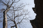 Tree on blue sky with old castle Ta Phrom. Cambodia — Zdjęcie stockowe