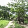 Asian elephant in forest — Foto de Stock
