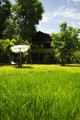 Rice field front of vintage wood house Thailand style — Stock Photo