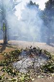 Burning tree — Stock Photo