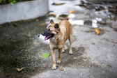 Perro vagabundo en acera — Foto de Stock