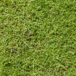 Green grass texture background — ストック写真