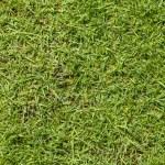 Green grass texture background — Stock Photo