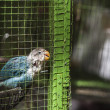 Stock Photo: Parrot in green cage