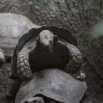 Turtles — Stock Photo #38827307
