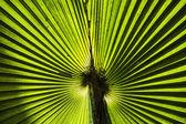 Fondo de textura de hoja verde — Foto de Stock