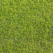 Green grass texture and backgrounds — Stock Photo