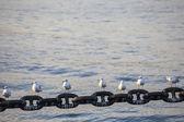 Seagull on Yokohama port — Stockfoto