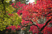 Autumn leaf season change — Stock Photo