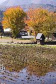 Cottage and rice field in small village shirakawa-go japan. autu — Stock Photo