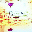 Lotus. Water lily flower — Stock Photo #42835171