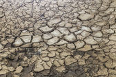 Cracked soil background and texture — Stock Photo