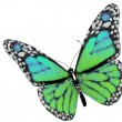 Green butterfly — Foto de Stock