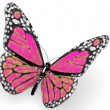 Pink butterfly — Stock Photo