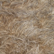 Stock Photo: Buffalo fur