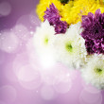 Dahlia Autumn flower design.With copy-space — Stock Photo