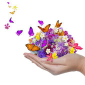 Hand holds flower spill many flowers and butterfly — Stock Photo