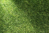 Beautiful green grass texture with sun beam — Stock Photo