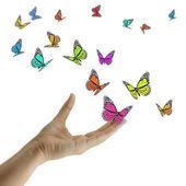Main en relâchant les papillons exotiques. — Photo