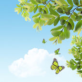 Butterfly on the background of the young spring leaves — Stock Photo