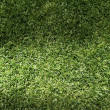 Beautiful green grass texture — Photo