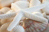 White finger starfish and seashells — Stock Photo