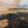 The dry grass in the field burns inflated — ストック写真