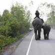 Постер, плакат: A young elephant smells her even younger