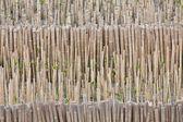 Bambou dans une ferme — Photo