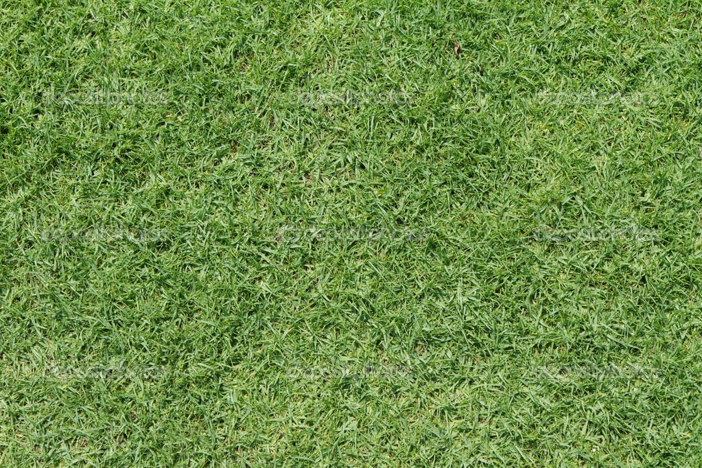 在绿色的高尔夫球场球