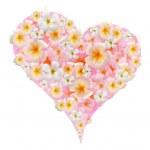 Closeup frangipani flower — Stock Photo #13150369
