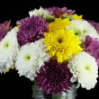 Chrysanthemum daisies — Photo