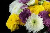 Margherite di crisantemo — Foto Stock