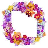 бабочка на цветах — Стоковое фото