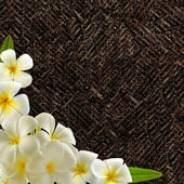 Plumeria — Foto de Stock
