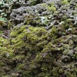 Royalty-Free Stock Photo: Closeup old Stone Overgrown with Green Moss in forest