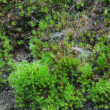 Closeup old Stone Overgrown with Green Moss in forest — Stockfoto