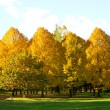 Autumn at the park — Stock Photo