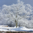 Tree under the snow - Stock Photo