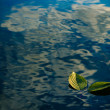 Two green leaves on the water — Stock Photo