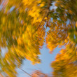 Tightening autumn — Stock Photo