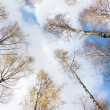 The trees against the sky — Stock Photo