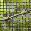 Barbed wire and metal lattice against green grass and foliage — Stock Photo