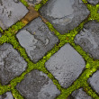 Green grass between wet cobblestones — Stock Photo #14118706
