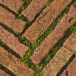 Green grass between cobblestones — Stock Photo