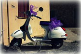 Wasp - Vespa — Stock Photo