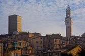 View of Siena — Stock Photo