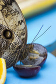 Butterfly eating — Stock Photo