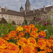 Tower of cluny abbey behind flowers — Stock Photo