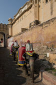 Elephants and Mahouts at Amber Fort — Stock Photo
